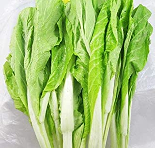Cabbage Seeds 10g Garden Vegetable Big White Green Red Organic Chinese Flowering Cuisine Cabbage for Planting Outside Door for Cooking Dish Soup Taste Good Delicious (White Cabbage Seeds)