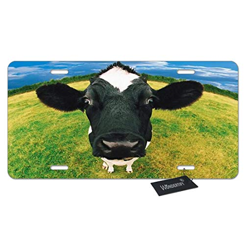 WONDERTIFY License Plate Funny Black Cow Watching on The Grass Green Decorative Car Front License Plate,Vanity Tag,Metal Car Plate,Aluminum Novelty License Plate,6 X 12 Inch (4 Holes)