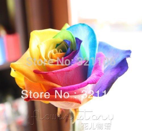 Rainbow Rose, Black Rose, Blue Rose etc. 9 couleurs bricolage Home Gardening Balcon & Jardin Parfumé Fleur Plante Bonsai Décoration