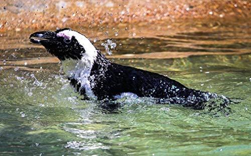 NoNo Pinguïn vogel-Afrikaanse pinguïnschilderij door cijfers DIY uniek