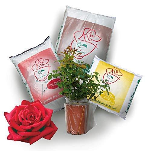 Kit Pronto Trapianto per rosa in vaso Rose Barni®, completo di terriccio, concime e stallatico per il trapianto e manutenzione della rosa. Pianta viva con kit di giardinaggio. (Rossa)