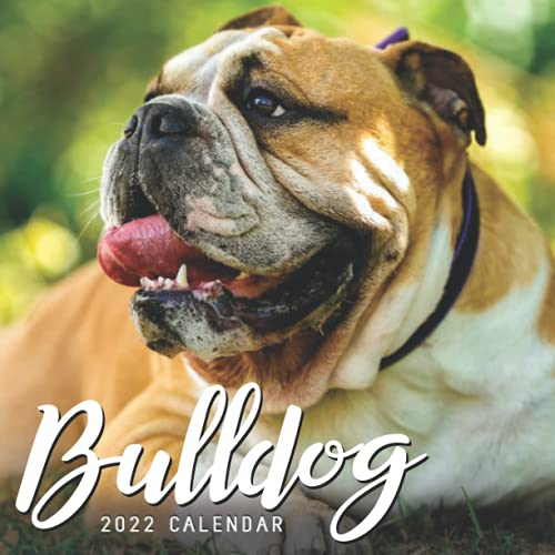 Bulldog 2022 Calendar: Mini Calendar 2022 with Large Grid for Note - To do list, Gorgeous 8.5x8.5'' Small Calendar, Non-Glossy Paper
