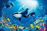 1art1 54697 Unterwasserwelt - Orkas, Lebensfreude 8-Teilig Fototapete Poster-Tapete 368 x 254 cm