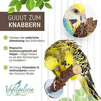 Lot de 5 perchoirs en bois naturel pour perruche ondulée, accessoire essentiel dans cage à oiseaux