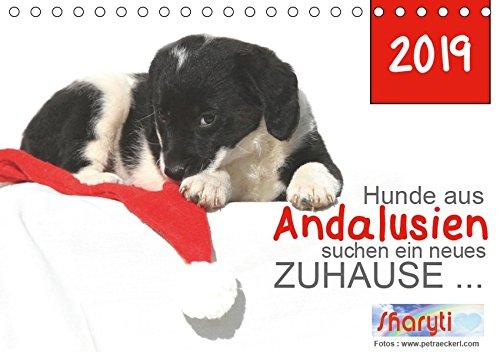 Hunde aus Andalusien suchen ein neues Zuhause ... (Tischkalender 2019 DIN A5 quer): Wunderbare Hundefotos mit denen Sie den Tierschutz in Andalusien ... (Monatskalender, 14 Seiten ) (CALVENDO Tiere)