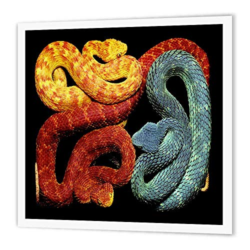 "3dRose ht_101711_1 Colorful But Deadly Blue Orange N Yellow Poisonous Snakes Iron on Heat Transfer, 8 by 8"", for White Material"