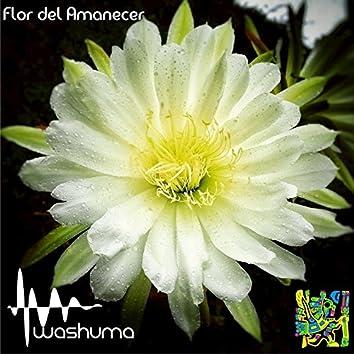 Flor Del Amanecer - Single