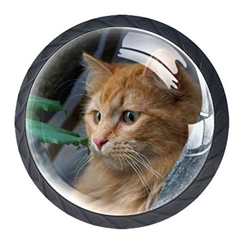 Juego de 4 pomos para armario de cocina de 1,18 pulgadas, botones de cristal para cajones con kit de hardware para dormitorio, muebles de cocina, diseño de gato