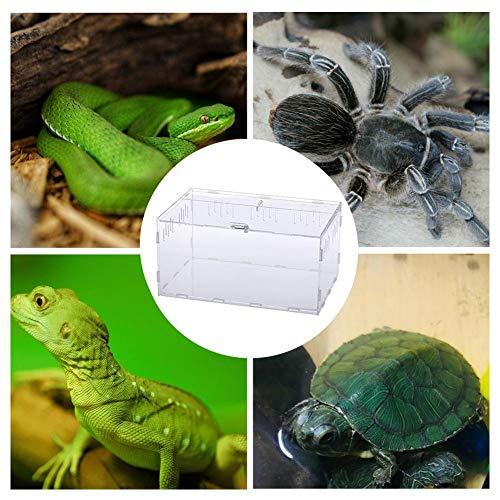 Dynamicoz Acryl Terrarium Spinne Zucht Box Reptil Fütterung Zum Klettern Haustier Schlange Eidechse Skorpion Tausendfüßler Frosch Live Food Storage Insektenbeobachtung Show
