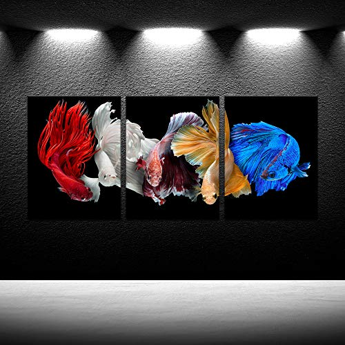 iKNOW FOTO Five Betta Fish Canvas Prints Siamese Fighting Fish isolated on Black Background Wall Art Beautiful Movement Macro Photo Giclee Artwork Animal Painting Ready to Hang 12x16inx3pcs