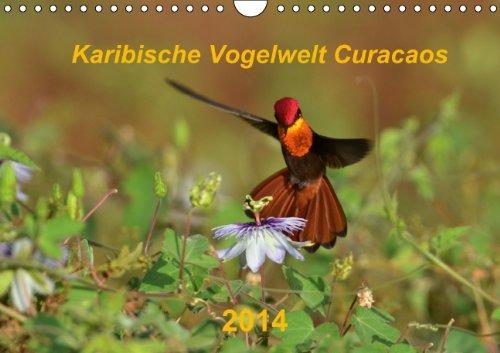 Karibische Vogelwelt Curacaos (Wandkalender 2014 DIN A4 quer): 13 Aufnahmen aus der Vogelwelt Curacaos (Monatskalender, 14 Seiten)