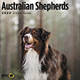 Australian Shepherds Cal 2020 (Dog Breeds)
