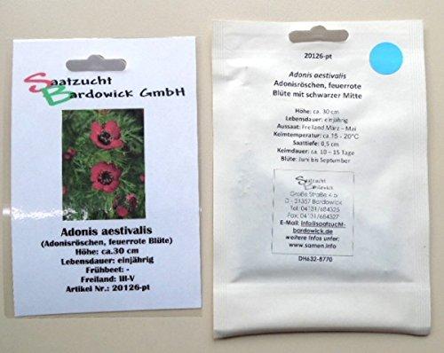 rote Sommer Adonisröschen Blumensamen...