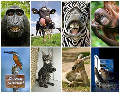 LUSTIGE TIERE VII Postkarten-Set mit 8 Motiven je 2 St. = 16 St.) mit witzigen Tieren für Sammler und Postcrossiong von EDITION COLIBRI