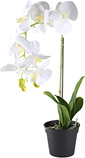 GTIDEA 21 inches Artificial Orchid Bonsai Plant Real Touch PU Fake Phaleanopsis Branches with Black Plastic Pot Home Office Bedroom Table Centerpieces Decor White