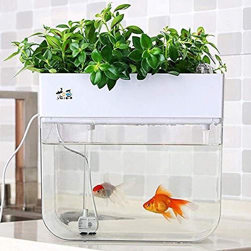 BIGHAVE Mini Aquaponic Ecosystem Aquarium Hydrokultur-Reinigungsbehälter Fisch füttert Pflanzen Großes Garten- und Familienprojekt