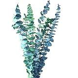 INVISIKAYAK - Ramas de eucalipto preservadas. La sensación de frescor puede durar alrededor de 5 años