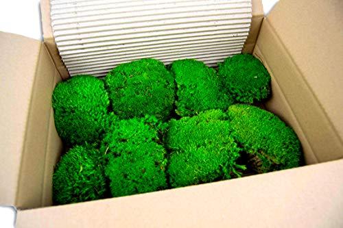 Premium Kugelmoos konserviert 1 Lage 25 x 35 cm ausgesuchte Mooskugeln, haltbar für die Dekoration mit Moos Dekomoos Prime Mooskissen Bollenmoos Osterdeko Frühlingsdeko