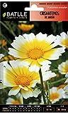 Semillas de Flores - Crisantemo Jardín Flor Grande variado - Batlle