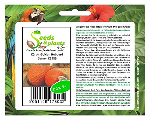 Stk - 5x Kürbis Golden Hubbard - Kürbis Samen Gemüse KS589 - Seeds Plants Shop Samenbank Pfullingen Patrik Ipsa