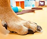 Dr. McHenry's Dog Toe Treads - Senior Dogs Mobility Support - Instant Traction for More Action - Reduce Slipping & Struggling, Pain & Inflammation - Increase Traction & Mobility for Your Dog