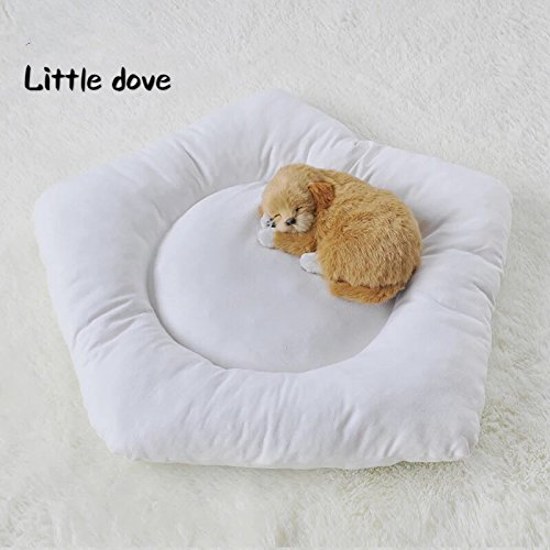 little dove Camas