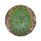 Alfombrilla de ratón Redonda de Goma Antideslizante Planta Flor Nacional de Lesotho Sudáfrica de Aloe Polyphylla Spinning Spirning Aloe Vera Multicolor 7.9'x7.9'x3MM