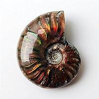 1ピースレアライトアンモナイト化石シェルカラフルな化石シェルコレクションミネラル検体-20-30mm