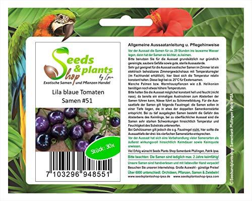 Stk - 30x Lila Blaue Tomaten Pflanzen - Samen #51 - Seeds Plants Shop Samenbank Pfullingen Patrik Ipsa