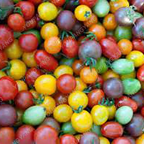 100pcs / sac rare graines de poivron rouge tomate Graines Bonsai légumes sains Heirloom biologiques et les graines de fruits pour la maison couleur mélangée jardin