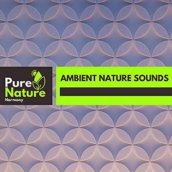 Ambient Nature Sounds