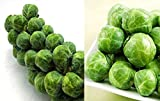 100+ Long Island Improved Brussel Sprouts Seeds Heirloom Non-GMO, Delicious from USA