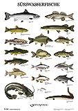 Rhino Verlag Swasserfische - Poster