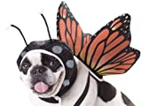 California Costumes Pet Butterfly Dog Costume