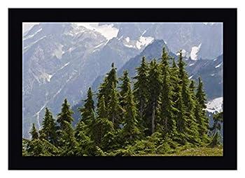 WA North Cascades NP Mountain Hemlock Trees by Don Paulson - 21  x 30  Black Framed Canvas Art Print - Ready to Hang