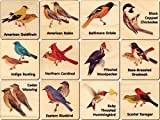 Peterson Backyard Bird Memory Tiles - Made in USA