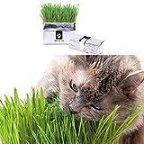 Semillas de hierba de trigo y hierba de cebada para cultivar su propia hierba de mascota de semilla de interior en solo 7 días (paquete de 2)