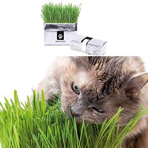 Cat Grass Wheat Grass Sand Barley Grass Seeds Grow Your Own Pet Grass from Seed Indoor in Just 7 Days(2Pack)