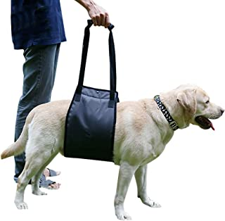 Amazon.es: silla de ruedas para perros - 10 - 20 EUR ...