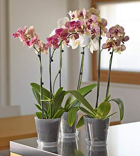 Euro 3 Plast Vaso in plastica Clivo Orchidee Trasparente d. 14 cm Linea MITU