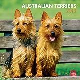 2013 australian terriers calendar