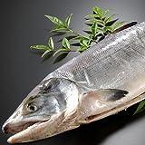 サーモン専門店岩松 北海道産 新巻鮭(秋鮭)一本物 約3kg 化粧箱入