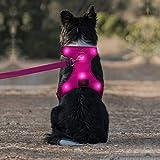 Domi LED-Hundegeschirr, per USB wiederaufladbar, kein Ziehen, Hundegeschirr mit bequemem, gepolstertem Anzug für kleine, mittelgroße und große Hunde, M [Neck:16.5'-22.5'; Chest:22.5'-32.5'], rose
