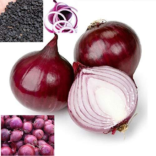 100 Semillas/paquete Cebolla Vegetal Primavera Semillas de Cebolla Roja Inicio para Plantar El Cultivo del País