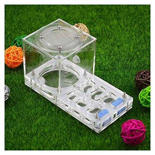 ZKZK Ant Farm Ant Moisturizing Nest, Insect Ecology Box, Educational & Learning Großes Geschenk for Kinder und Erwachsene 5.5x3.2x2.8 (Size : -)