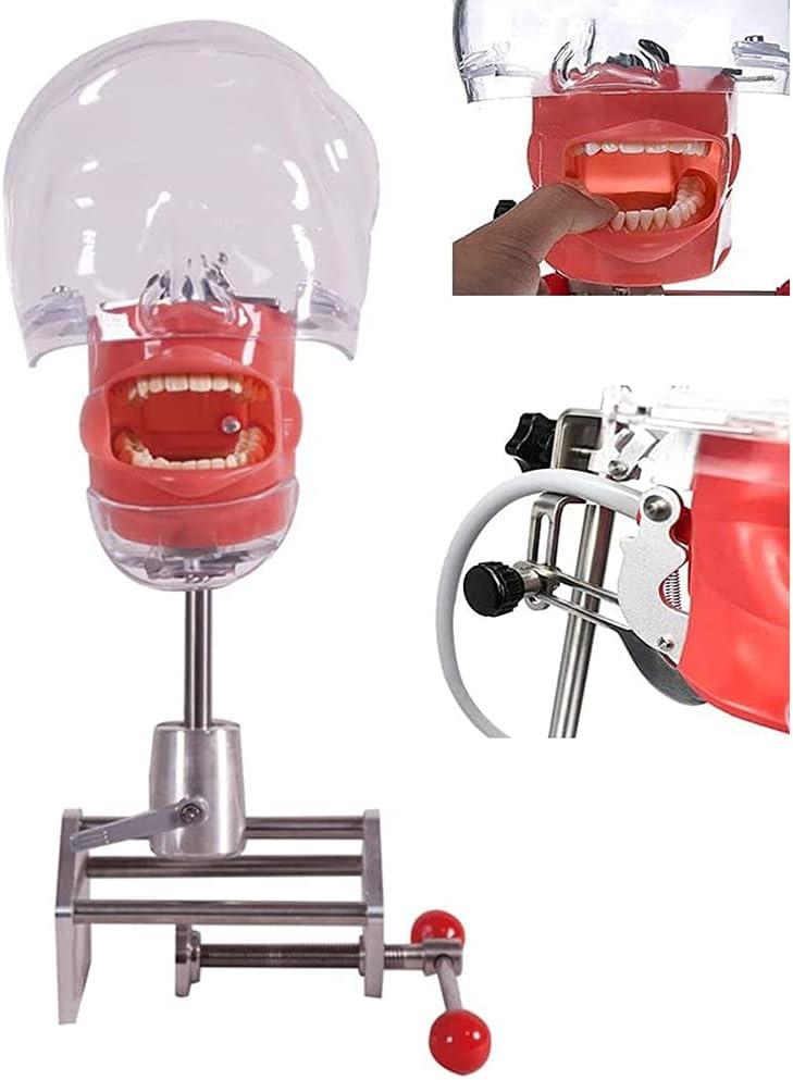 HGYYIO Industry No. 1 Head Model Dental Simulator Dentist 100% quality warranty! for Educ Phantom