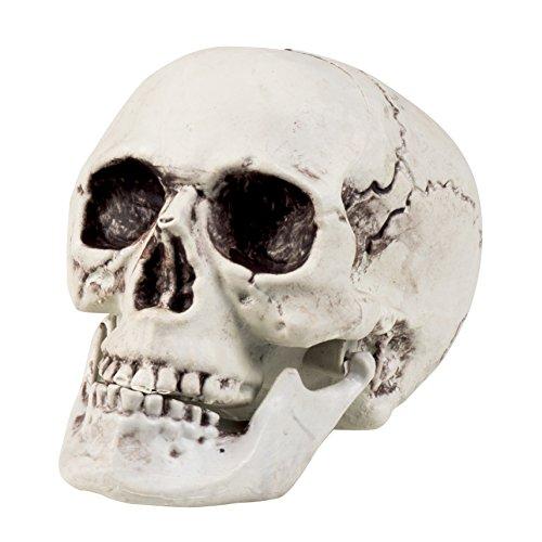 Boland 74362 Maxilla – Crâne avec mâchoire articulée, 17 x 15 cm - Blanc