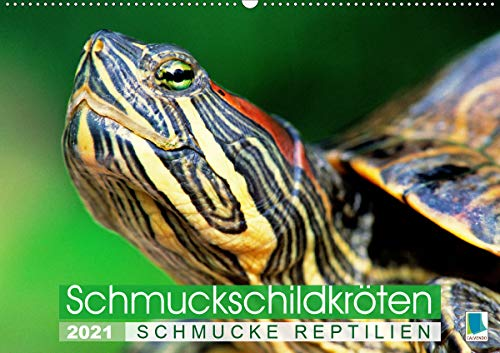 Schmuckschildkröten: Schmucke Reptilien (Wandkalender 2021 DIN A2 quer)