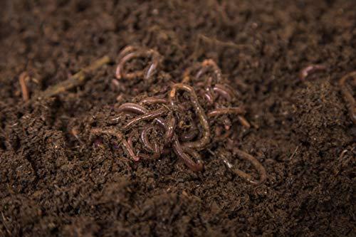 VERMIORGANIC Lombriz Roja Californiana (Eisenia Foetida), 500 lombrices. Seleccionadas a Mano. Formatos de 100, 500 y 1000 Un. Envíos de Lunes a Jueves, Servicio 24H.