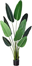 banana leaf plant outdoor